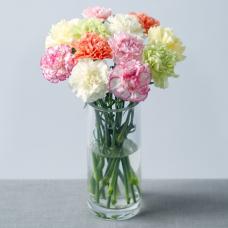 12 Carnations with Gypsophila